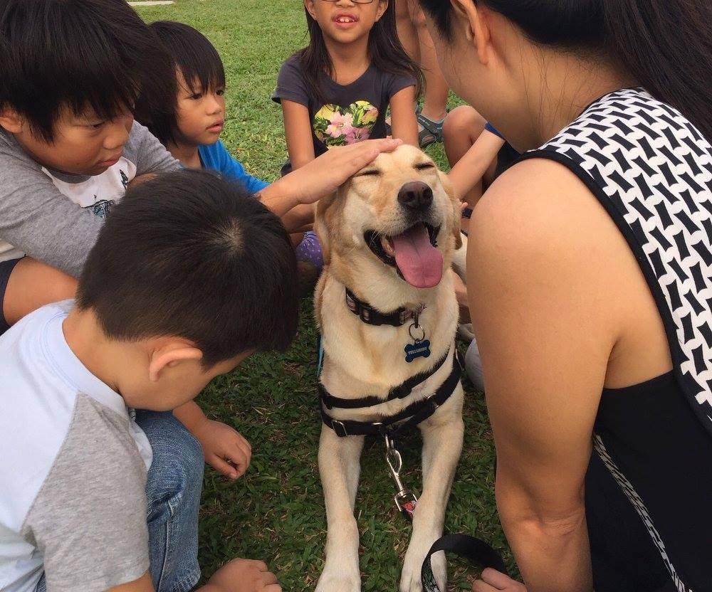A dog is being pet by children and a handler