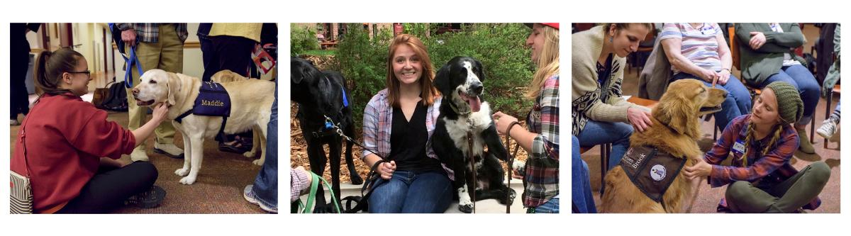 Three images of therapy dogs in training with their human handlers