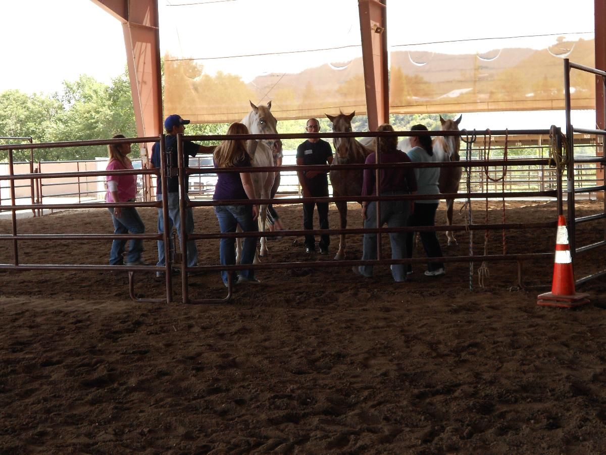 Equine assisted team building